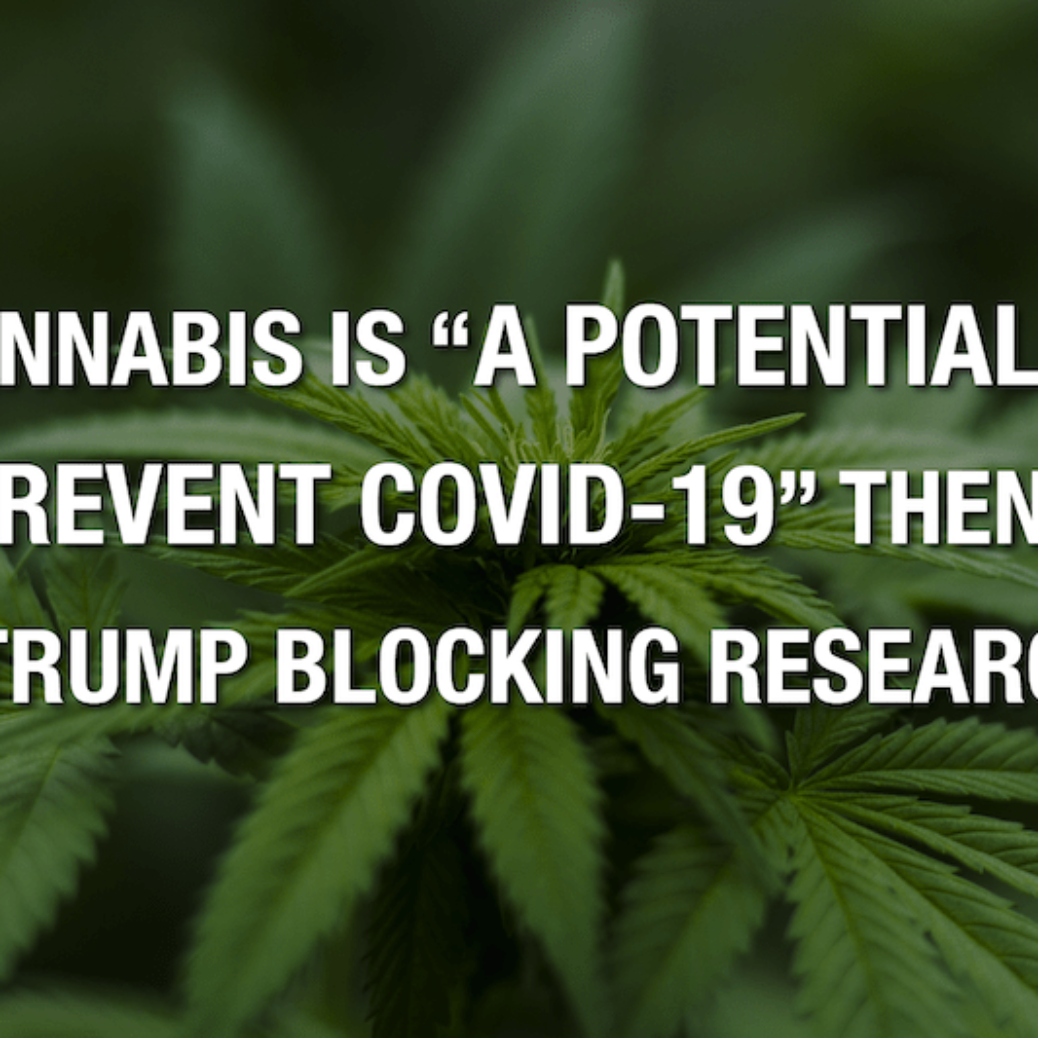 "If Cannabis Is ""A Prospective Way To Avoid COVID-19"" Then Why Is Trump Blocking Research Study?"