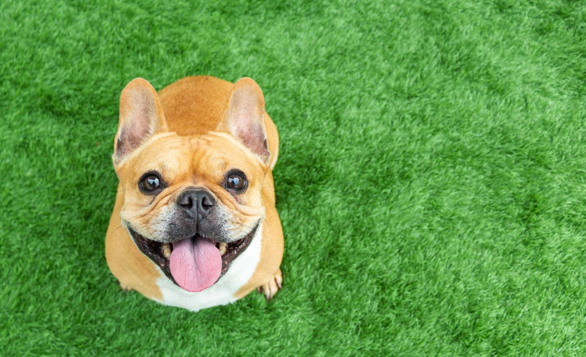 A Growing Group Of CBD Customers Isn't Even Human. Its Members Value CBDs' Anti-Pain Advantages– With A Definite 'Woof!'