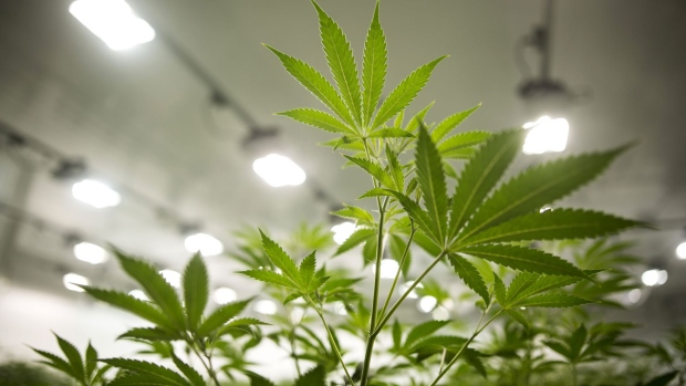 Strong medical pot sales help Canopy Growth beat Q1 expectations
